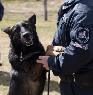 Börtönben csapnak össze a szolgálati kutyák